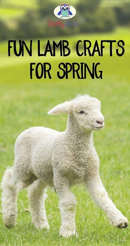 Spring Lambs WItty Hoots