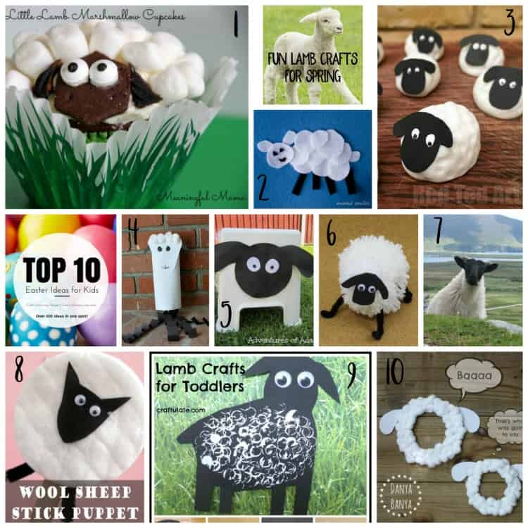 Top 10 Lamb Ideas Witty Hoots